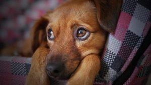 Hundesteuer und Anmeldung